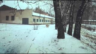Пшеничный терьер 7,5 мес и зима 2016