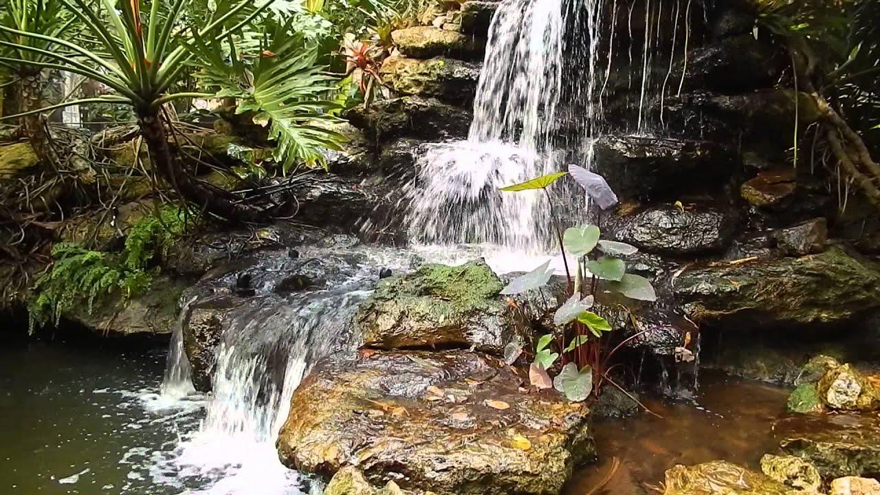 Waterfall   Marie Selby Botanical Gardens, Sarasota Florida