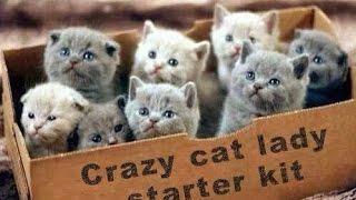 Смешные коты 8 (Funny Cats Compilation)