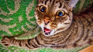 Смешные кошки 2019 Новые приколы с котами до слёз, смешные коты приколы собаки 2019 funny cats #60