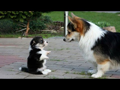 AWW CUTE BABY ANIMALS Videos Compilation Funniest and cutest moments of animals – OMG So Cute #8