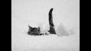 """Вышивка крестом: """"кот в снегу""""."""