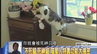 2014.09.05新聞龍捲風part6 「不死貓、死神貓」喵星人特異功能大揭密