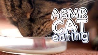 ASMR Cat - Eating #11
