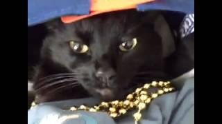 Что снится котам