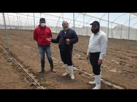 ברוקולי וכרובית באקוודור, כיצד מגדלים ירקות בגידול מיוחד, הרב יוסף דורפמן, Rabbi Yosef Dorffman