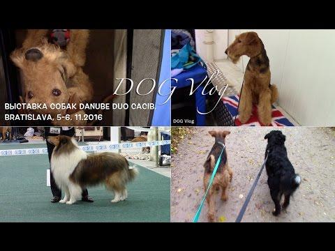 DOG VLOG: Дунайская выставка собак в Братиславе Danube Duo Dog Show 2016