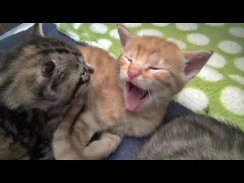 Hildy & Her Kittens - Vlog #2