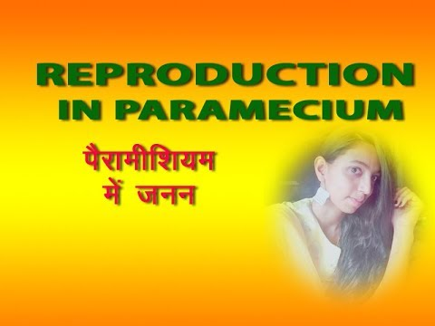 how do paramecium reproduce