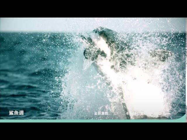 一年一度夏日狂歡《2020鯊魚週》預告:8月24日起,當週每日 晚上8點首播