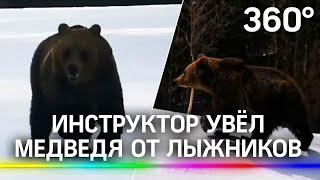 Инструктор увёл медведя от лыжников на горнолыжном склоне в Румынии