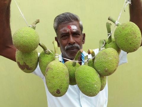 Cooking Curry Jackfruit Gravy in My Village - My Village Food