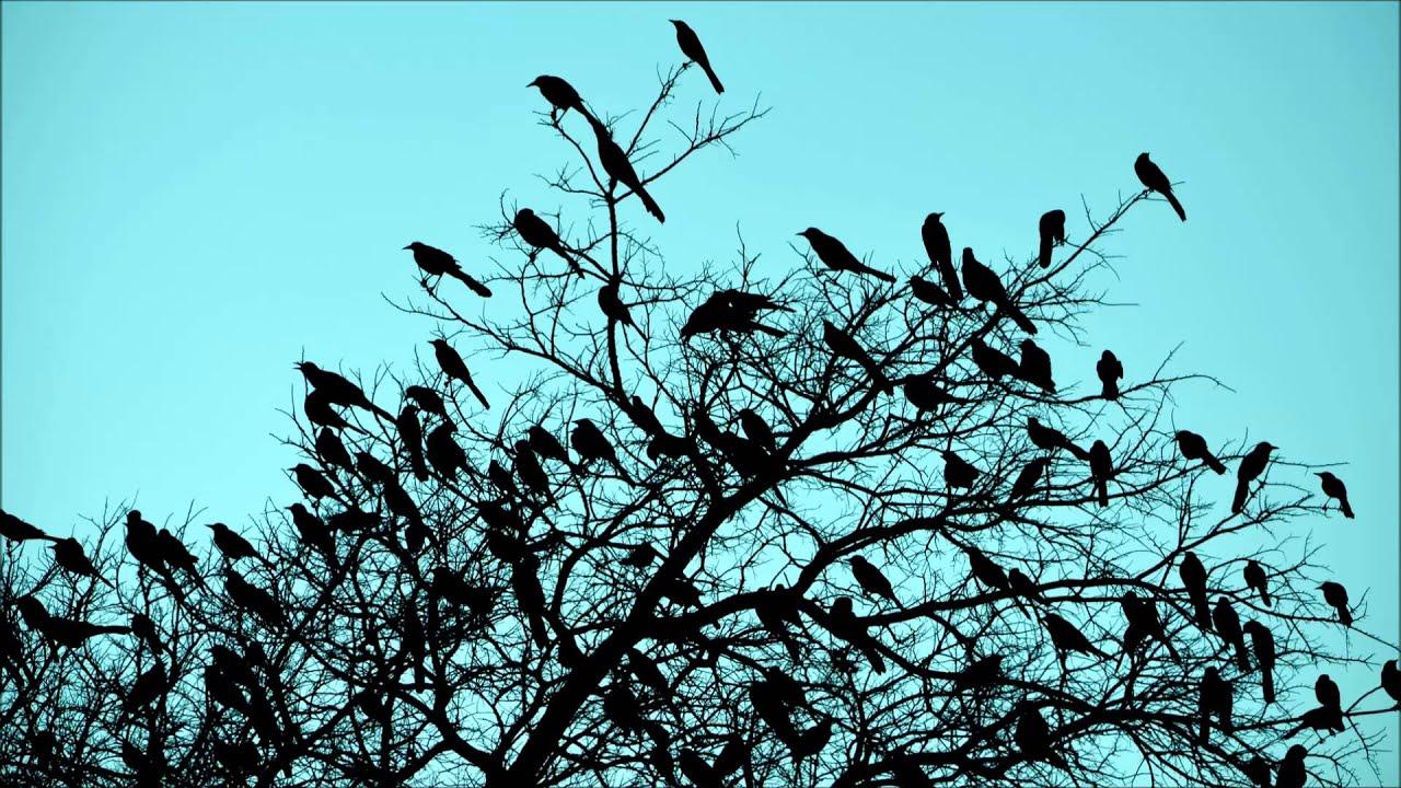 Resultado de imagem para BIRDS SINGING