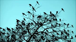 Birds singing in the morning - the relaxing sound of natural chirping birds