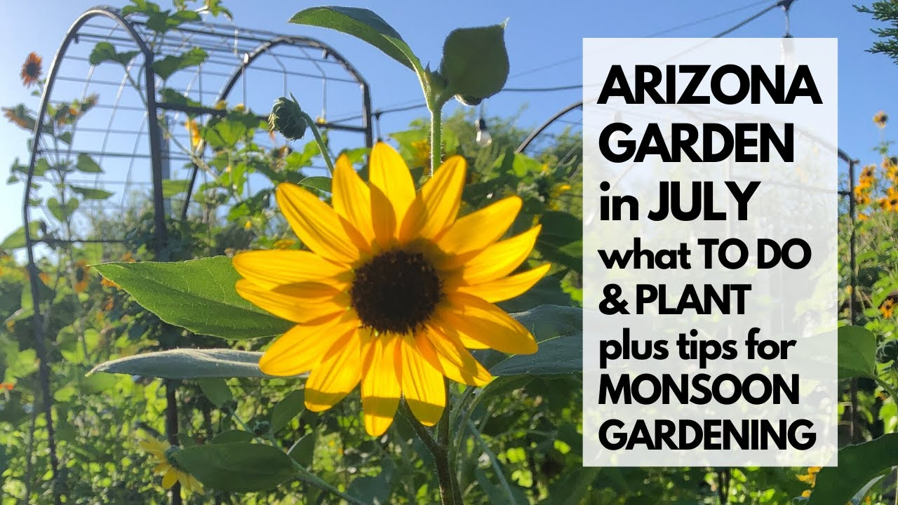 ARIZONA GARDEN in JULY: What TO DO & PLANT - plus tips for MONSOON GARDENING