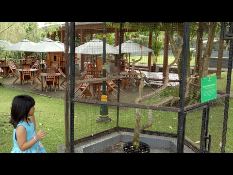 wisata-asyik-di-kaliurang---griya-persada-convention-hotel-and-resort---wisata-keluarga-jogja
