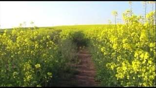 Biomasa - obnovitelné zdroje energie