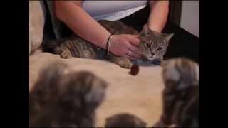 видео Лучшие гипоаллергенные корма для кошек