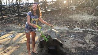 Черепахе 190 лет! Занзибар. Остров Призон(Впечатления от экскурсии на остров Призон, Занзибар. Как хорошо отдохнуть и хорошо провести время расскаже..., 2016-12-04T21:23:17.000Z)
