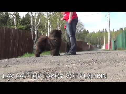 Lav Lap Top Takoy Vot Pushkin, 6 years