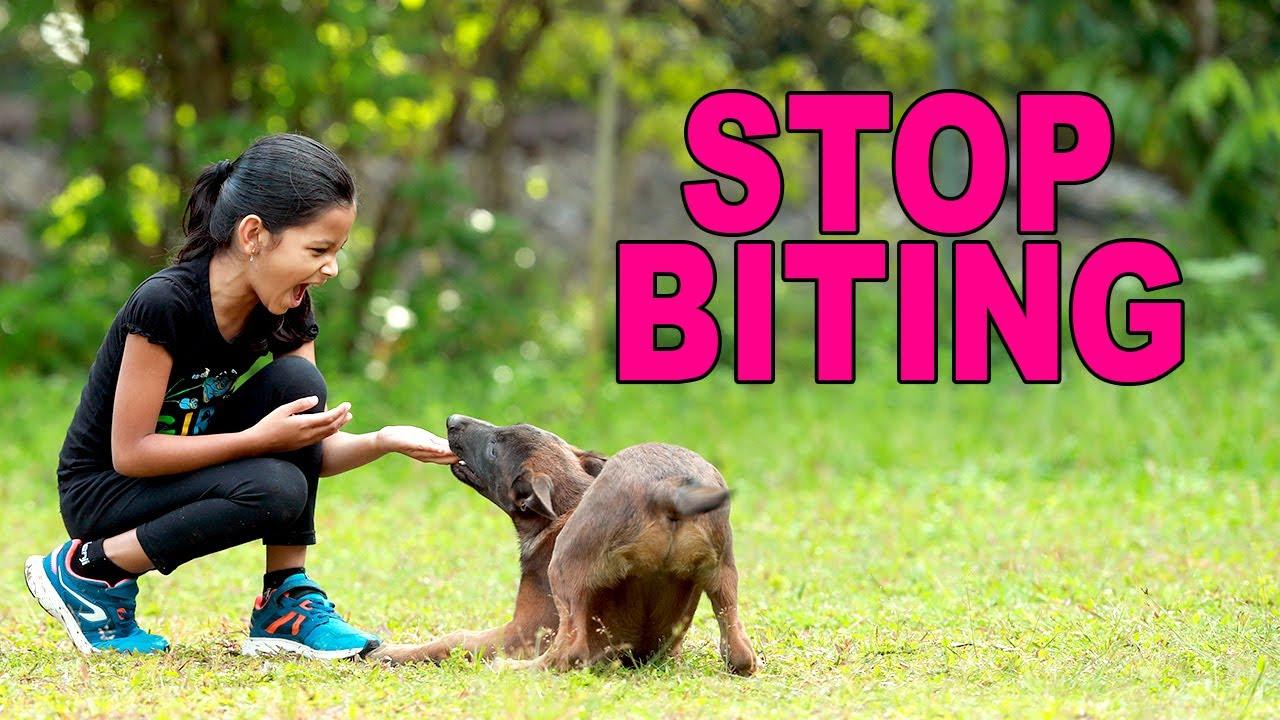 How to stop puppy biting.Saajan Saji Cyriac.9961310970