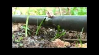 Repeat youtube video เกษตรน้ำหยด