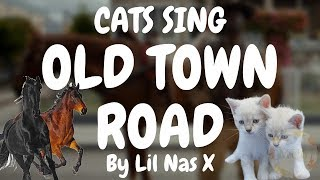 Cats Sing Old Town Road by Lil Nas X | Cats Singing Song