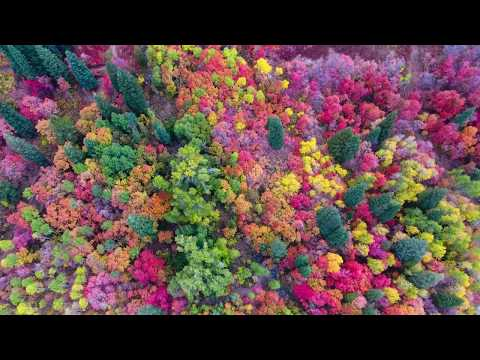 Angie Ward - Amazing Fall Colors At Utah's Snowbasin Resort By Drone!