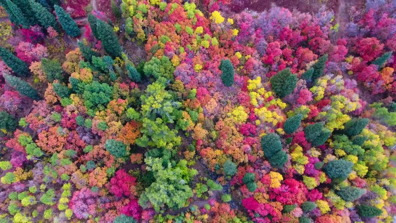 [ORIGINAL!] Utah Fall Colors at Snowbasin by Drone