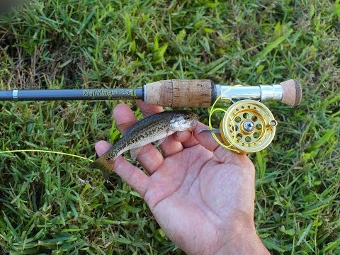 mini bass gone wild with micro fly reel by penfishingrods, Fishing Reels