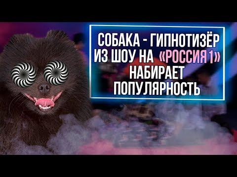 Из России с любовью. Собака гипнотизер из шоу на Россия 1 набирает популярность