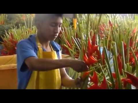 Exotic flower farms visit FLOWEX 2016