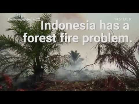 Indonesia has a forest fire problem that's entirely man-made