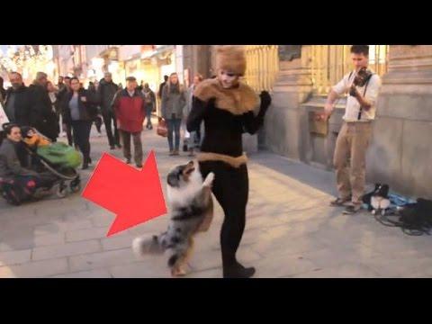 Dog Dance in Public – Sheltie Street Performance