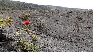 Kilauea Volcano Caldera Hike Hawaii