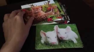 Postcrossing\Посткроссинг Обзор заказа открыток по 7 рублей Sale. Моя коллекция открыток