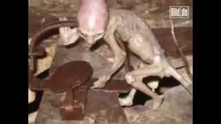 Human Hybrid Creature found in Mexico Farms