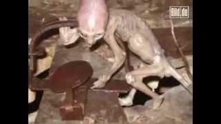 Human Hybrid Creature found in Mexico Farms
