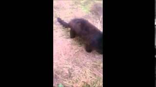 черный котенок Рязань