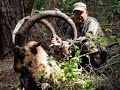 Bezoar Ibex Hunting in Turkey _ Teke Avı _ Recep Ecer
