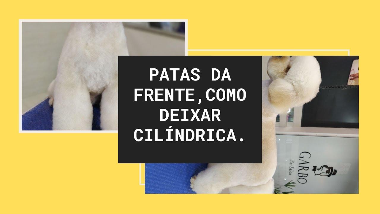 AULA N°17: Como deixar as patas da frente cilíndrica (Poodle)