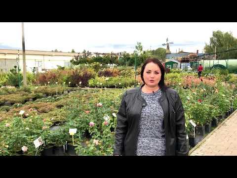 Ландшафтный дизайнер - Честно о садовом центре
