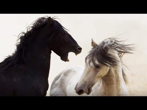 Cheval noir VS