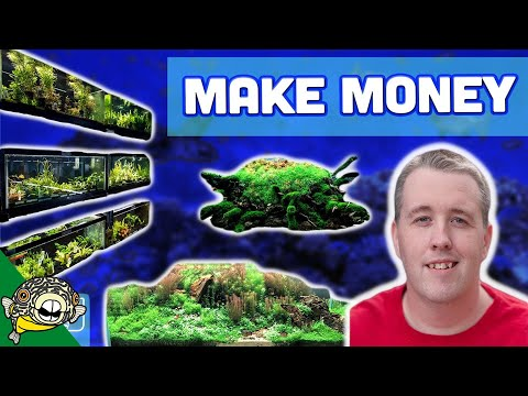How to Grow Aquarium Plants for Profit - Easy Money