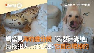 回家驚見「海豹」慘遭分屍!媽媽氣到找犯人...狗狗們全部超心虛|寵物|臟器