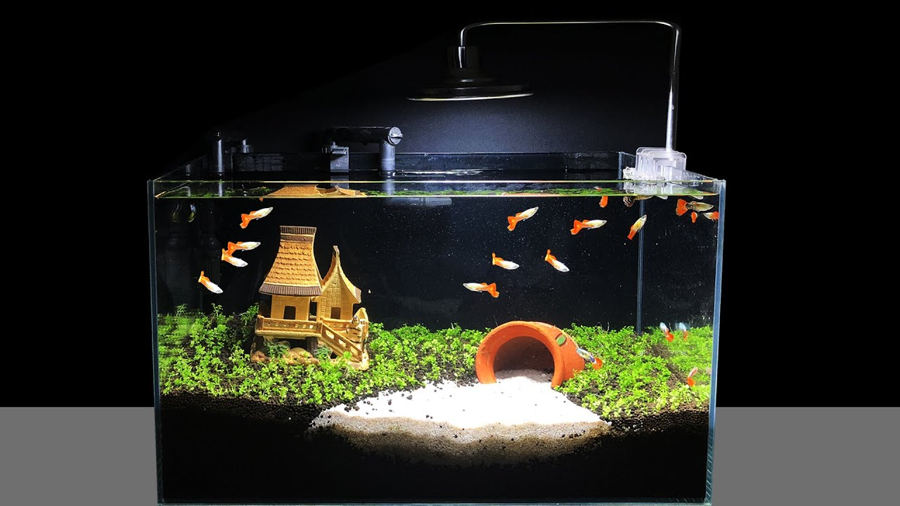 The challenge of making an Aquarium for Guppies | The last Aquascape