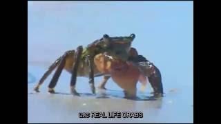 Plankton and Krabs (SpongeBob SquarePants Theme Song) - Thai sub เนื้อร้องฉบับภาษาไทย