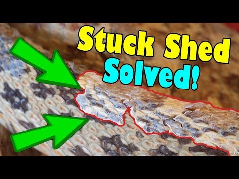 How to Remove Stuck Shed on Snakes