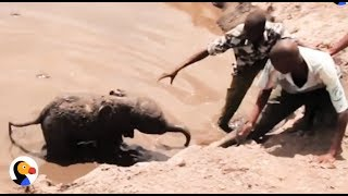 Baby Elephant Stuck In Mud Reunites With Mom | The Dodo