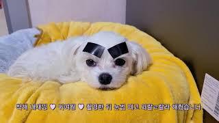 vlog 평화로운 강아지 햅삐 라이프 (일상브이로그,독…